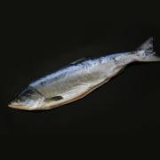 新巻鮭一尾